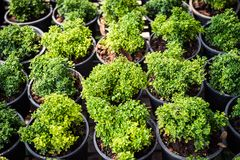 Growth of plant in potted closeup royalty free stock photo