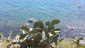 Growth of a plant in the sea in Syracuse. View of a plant growing near the sea in Siracusa Royalty Free Stock Photography