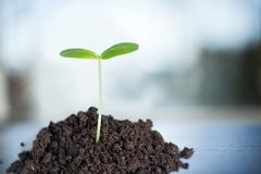 Growth Plant Royalty Free Stock Image
