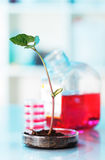 Growth of plants. Development of additives to accelerate the growth of plants Royalty Free Stock Photography