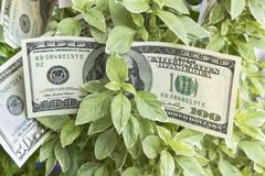 Growth in Profit, Money, Earnings Stock Images