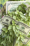 Growth in Profit, Money, Earnings Stock Photo