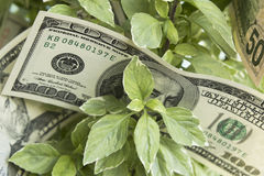 Growth in Profit, Money, Earnings Royalty Free Stock Photo