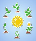 Growth progress icons Royalty Free Stock Photo
