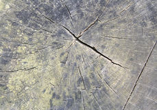 Growth Rings. Tree trunk showing growth rings Royalty Free Stock Images