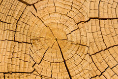 Growth rings, background Royalty Free Stock Photography