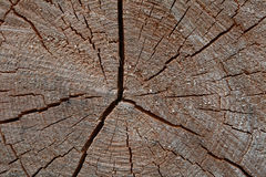 Growth rings Stock Image