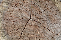 Growth rings Royalty Free Stock Photography