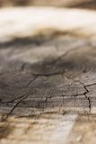 Growth Rings Cracks Royalty Free Stock Photos