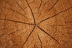 Growth rings on a log Royalty Free Stock Images