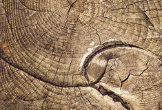 Growth rings sawing tree stump Stock Photography