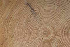 Growth rings of a tre, spruce tree Stock Images