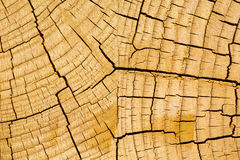 Growth rings, wood Stock Photos