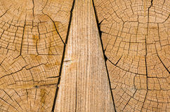 Growth rings, wood Stock Photo
