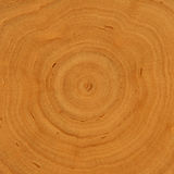 Growth rings - wooden background. Tree cross section with differentiated growth rings stock images
