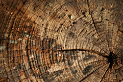 Growth rings wooden background Stock Photography