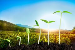 Growth. Seedling Plant Sowing Bean Dirt Isolated Royalty Free Stock Photos