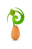 Growth of single almond leaf Stock Photos