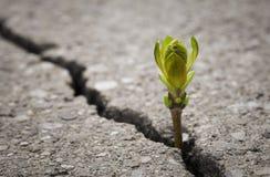Growth Stock Image