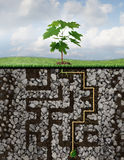 Growth Solutions. Business concept as a metaphor with a tree emerging from a seed sprouting roots that have journeyed a challenging maze or labyrinth of Royalty Free Stock Photo