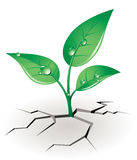 Growth sprout Royalty Free Stock Photography