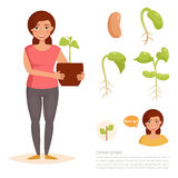 Growth stage of beans. Royalty Free Stock Images