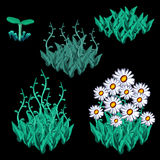 Growth stages of white chamomile, five items Royalty Free Stock Photo