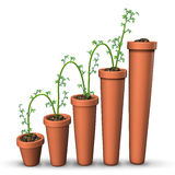 Growth Success Stock Image