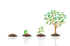 Growth tree Royalty Free Stock Photos