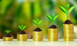 Growth tree on collect coins. Stack of coins with growth sprout plant with fresh green nature blurred background, Investment concept Stock Photos