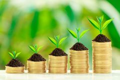 Growth tree on collect coins. Stack of coins with growth sprout plant with fresh green nature blurred background, Investment concept Royalty Free Stock Image