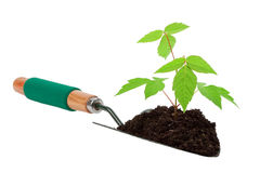 Growth tree Stock Image