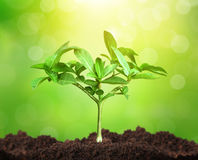 Growth of tree Stock Images