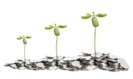 Growth of tree on pile of coins,  on white background. Money Stock Images