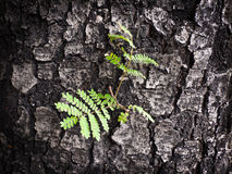 Growth of trees. Royalty Free Stock Photo