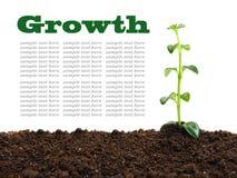 Growth Royalty Free Stock Photos