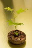 Growth in Your Savings Stock Photography