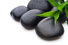 Growth or zen concept Royalty Free Stock Photo