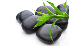Growth or zen concept. Green leaves on black pebbles, nature or zen concept Stock Photos