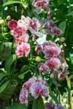 Growup de fleur d'orchidée dans la salle en verre images libres de droits
