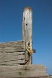 groyne海运被风化的木 免版税库存照片