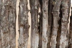 groyne的老木头 免版税库存图片