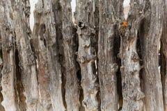 groyne的老木头 免版税图库摄影