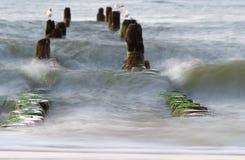 Groyne στη θάλασσα της Βαλτικής Στοκ Φωτογραφίες