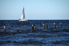 Groyne на Балтийском море Стоковые Фотографии RF