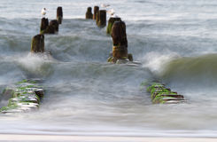 Groyne на Балтийском море Стоковые Фото