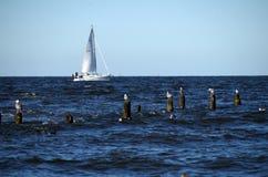 Groyne przy morzem bałtyckim Zdjęcia Royalty Free