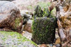 Groyne on shore Stock Images