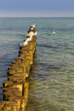 Groynes in the Baltic Sea Stock Photography