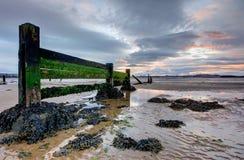 Groynes do beira-mar durante a baixa maré no por do sol Fotografia de Stock